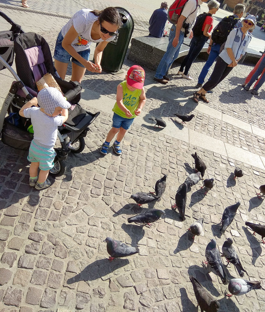 atrakcje dla dzieci krakow rynek golebie