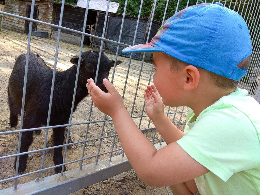 atrakcje dla dzieci krakow zabierzow rogate ranczo