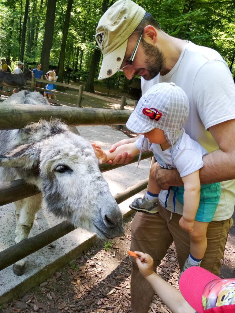 atrakcje dla dzieci krakow zoo
